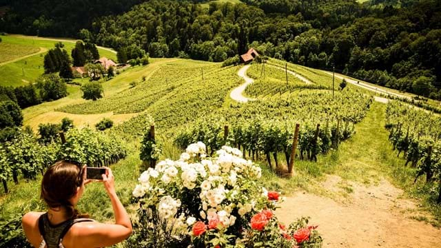 Romantic view surrounded by vineyards