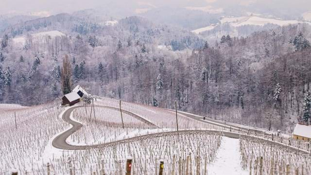 Skiing and wine experiences in Maribor