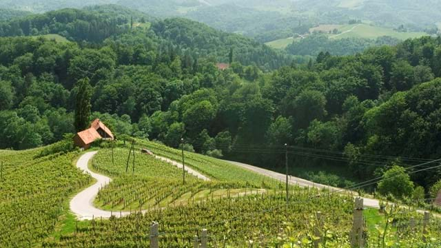Maribor: Paradise for wine lovers - 2 days